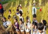 대구시, 신천서 벼 베기 체험 및 수확 기쁨 체험