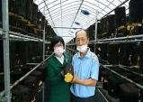대구농업기술센터, '상황버섯 인공재배 기술' 성과도출